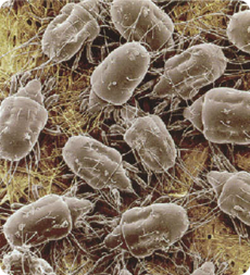 Dust Mites & Cockroaches